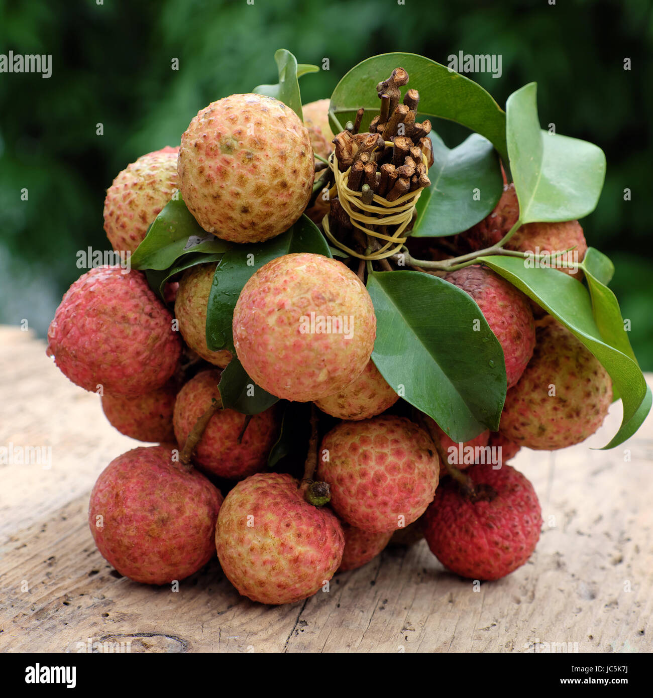 Vietnam fruit, litchi or lychee, a tropical fruits that delicious, sweet at Bac Giang, bunch of vai thieu on green - Stock Image