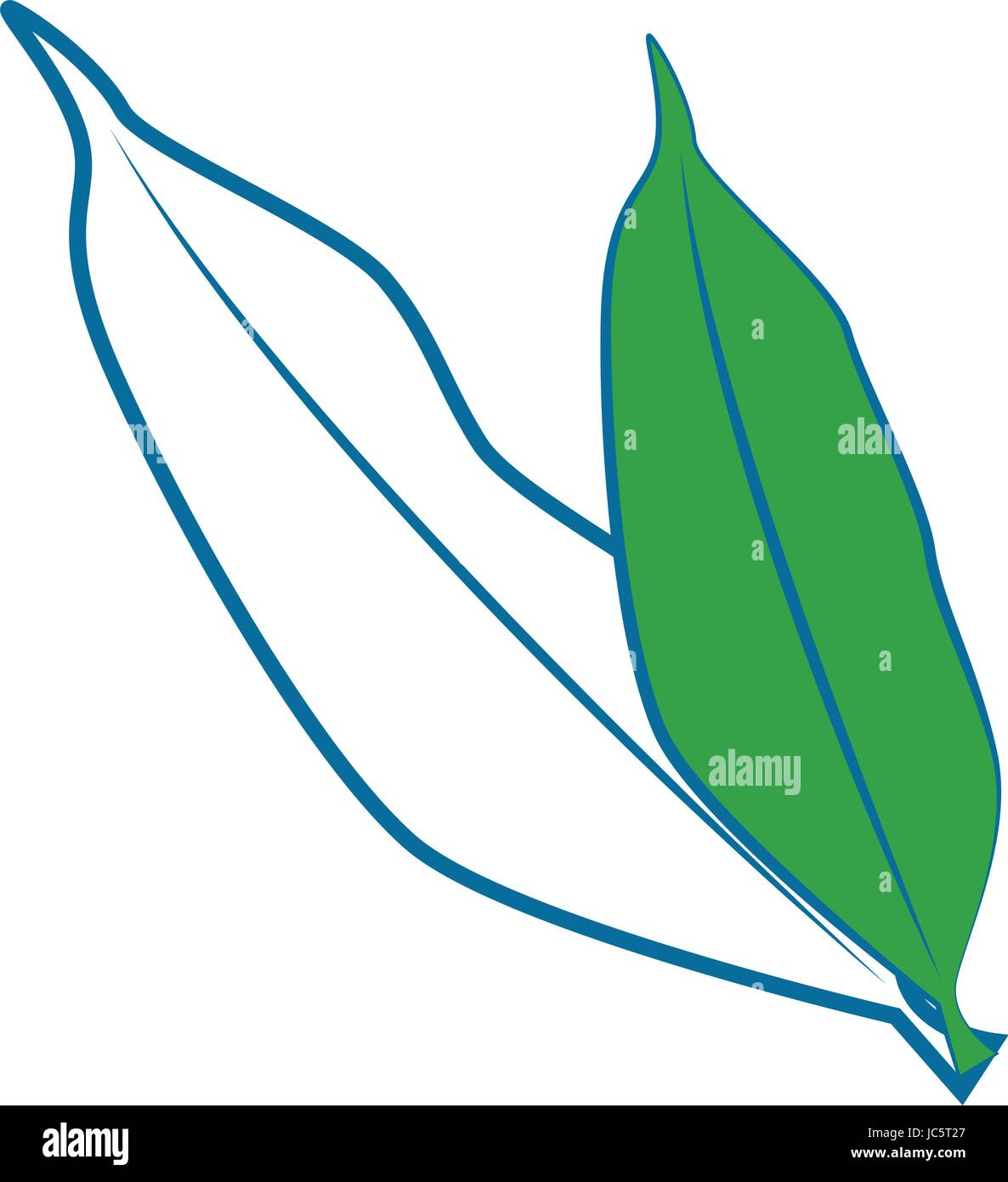 Fruit leaves isolated - Stock Image