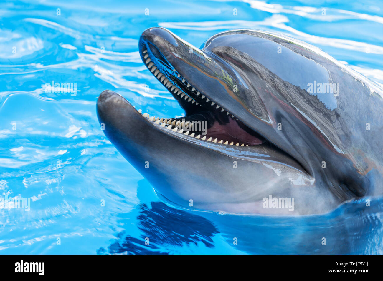 Portrait of a dolphin close-up - Stock Image