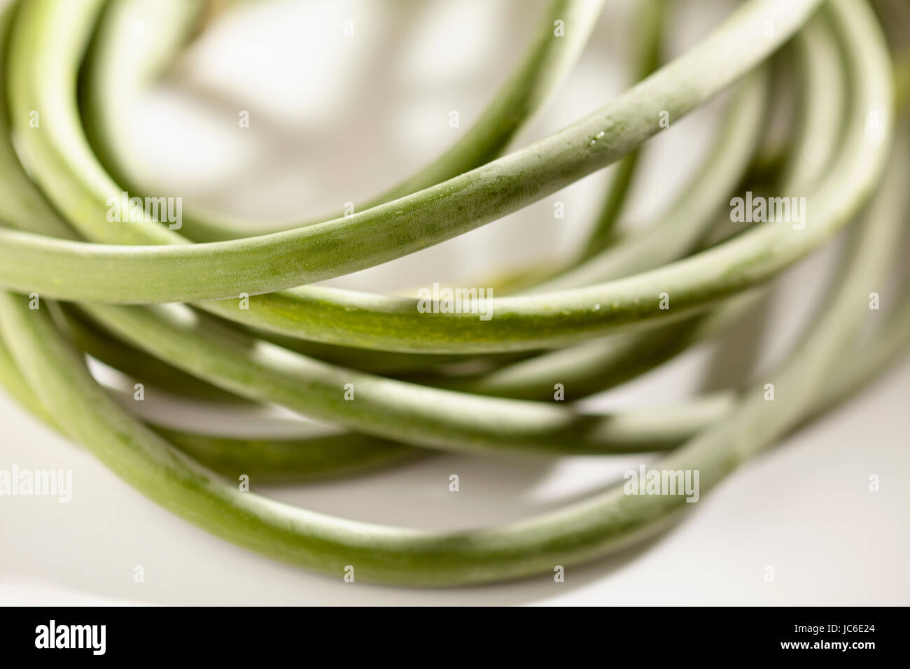 freshly picked garlic scapes from Pennsylvania, USA - Stock Image