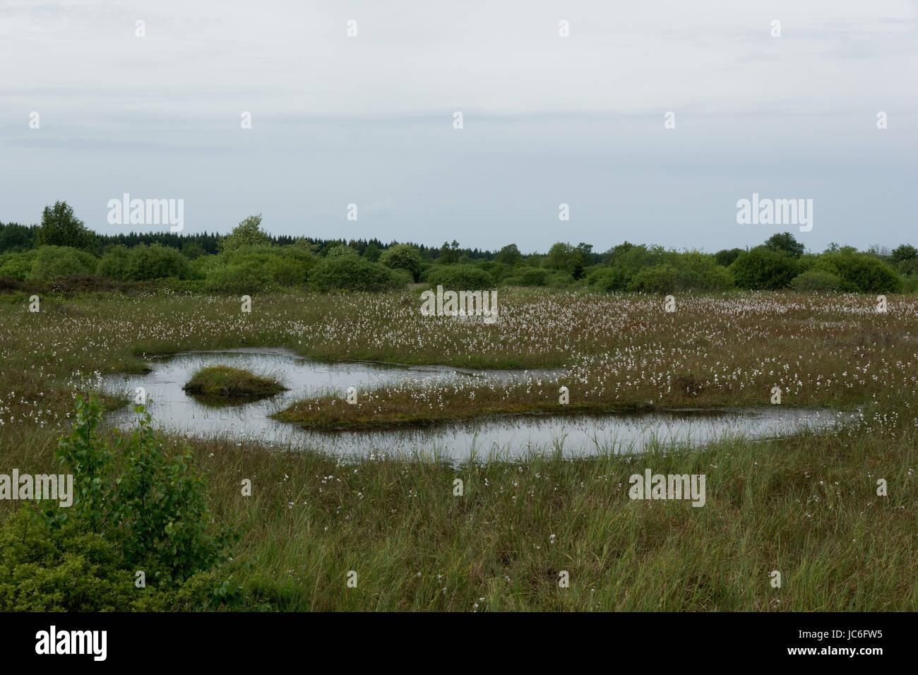 in the reserve hohes venn,hautes fagnes,belgium Stock Photo
