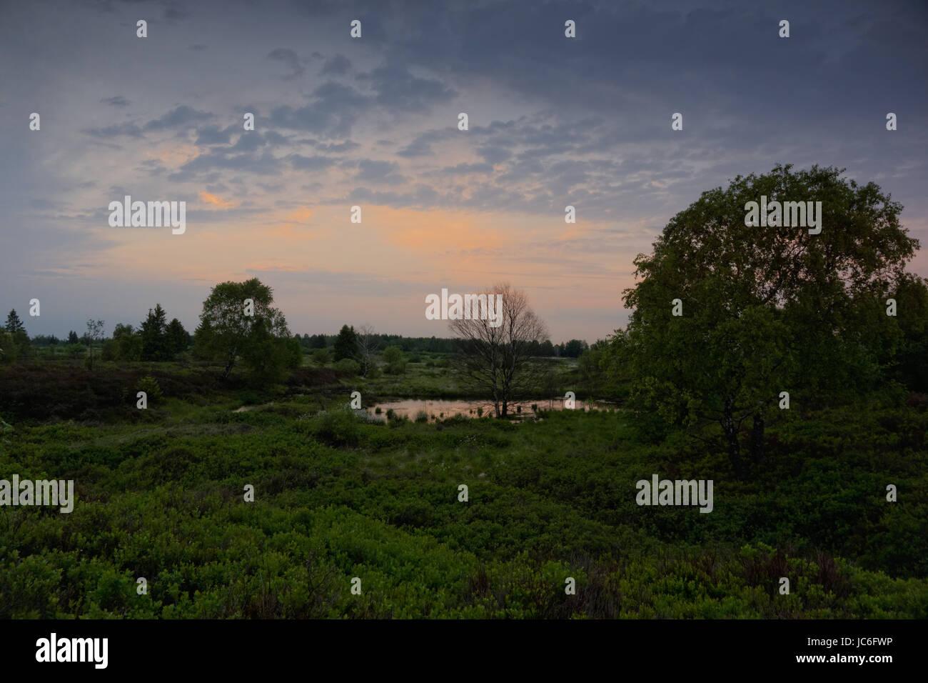 in the reserve of hautes fagnes,hautes fagnes,belgium Stock Photo