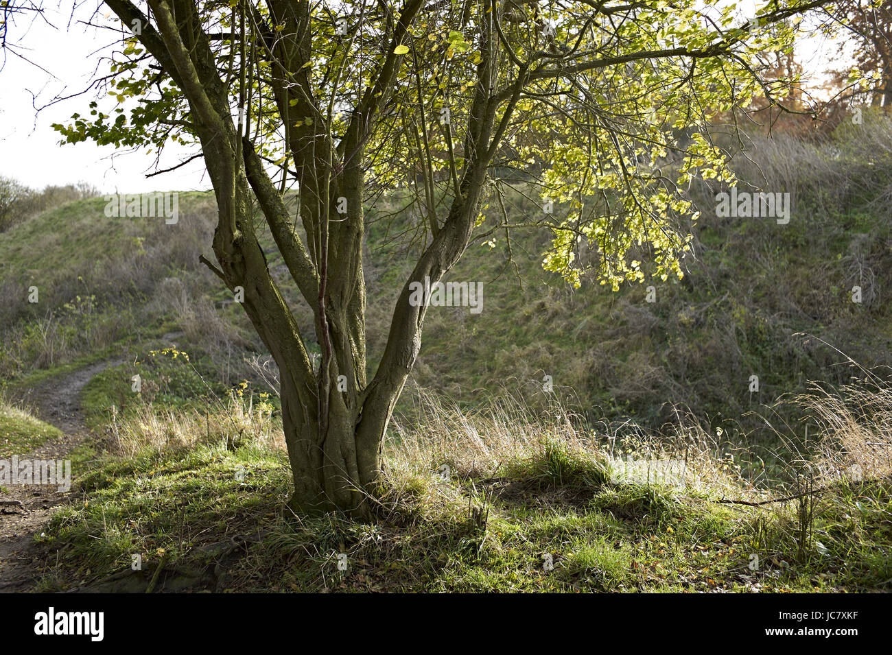 Oxfordshire, child walks past Wittenham Clumps is the common name for a pair of wooded chalk hills in the Thames - Stock Image