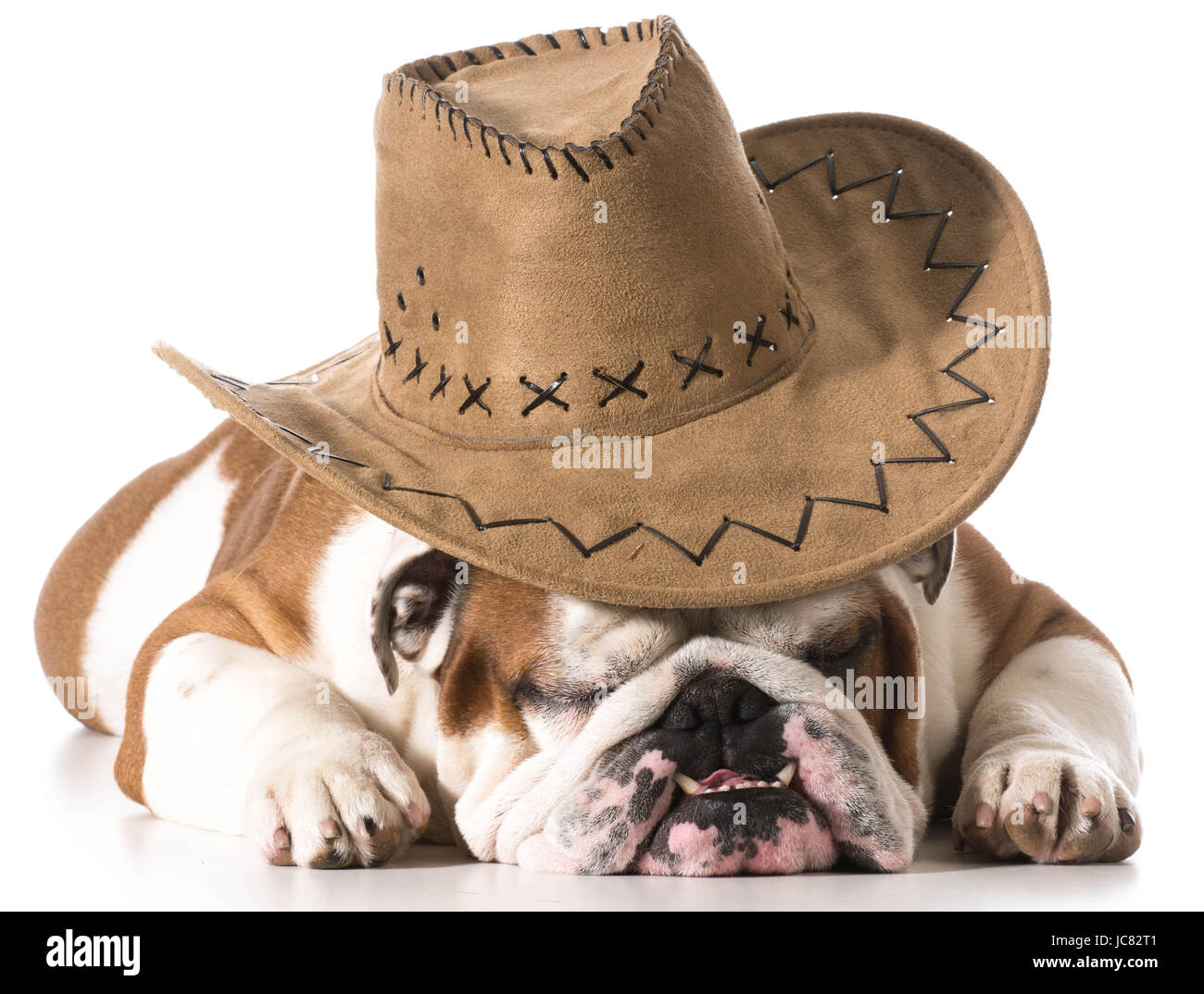 Dog Wearing Cowboy Hat On White Background English Bulldog Stock