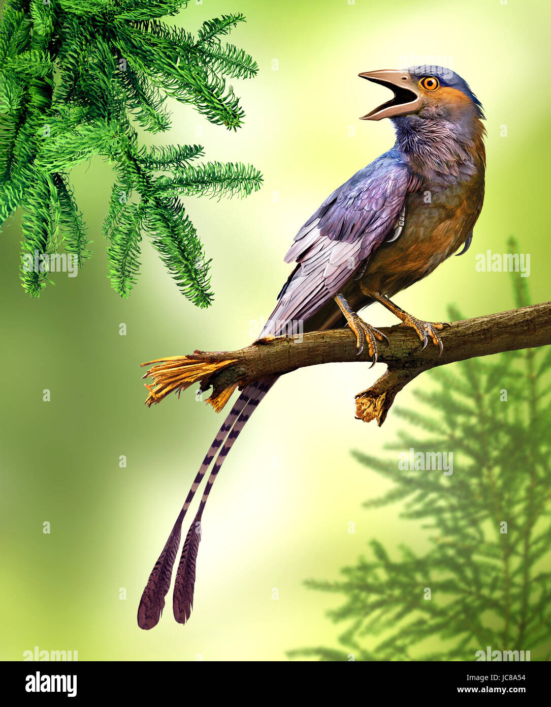 Confuciusornis is a genus of primitive crow-sized birds from the Early Cretaceous - Stock Image