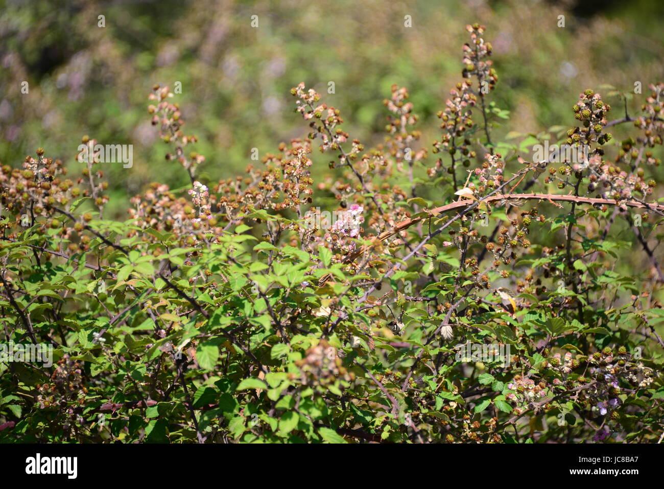 sÜsse frucht blÄtter - Stock Image
