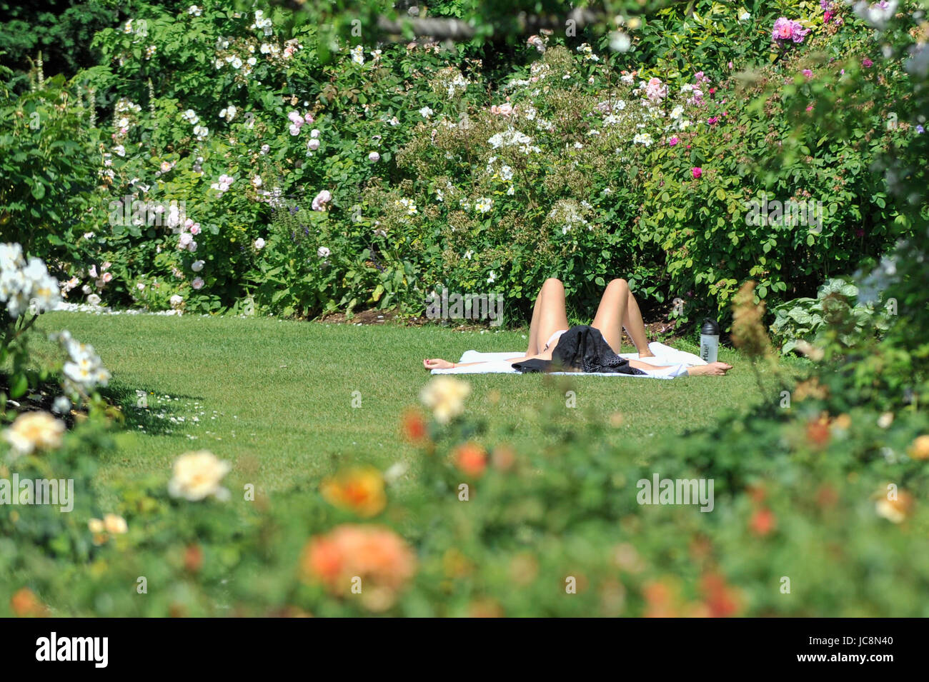 London, UK.  14 June 2017.  A sunbather relaxes amidst the floral displays in Regent's Park in fine weather. - Stock Image