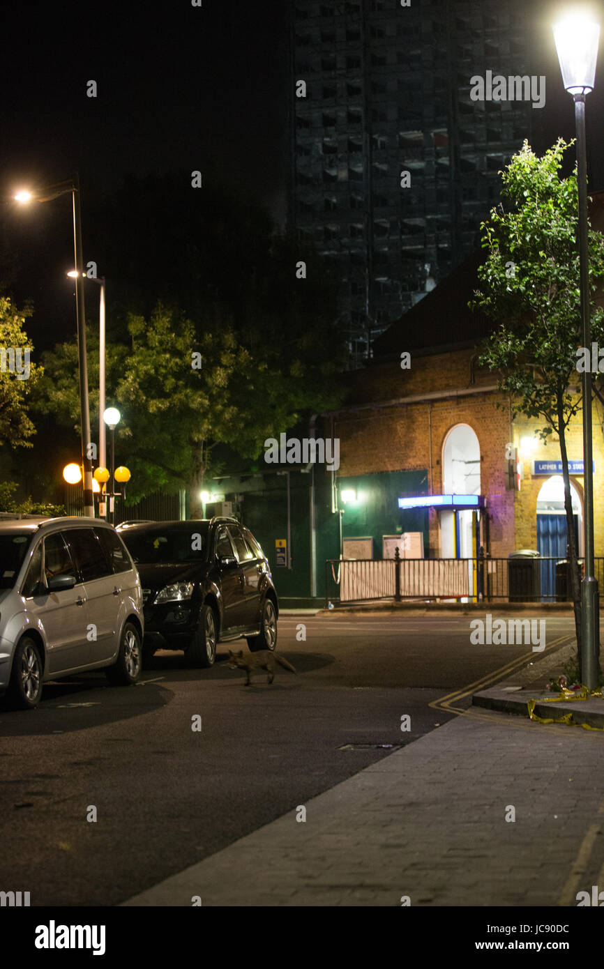 London, UK. 15th June, 2017. An urban fox passes in front of Grenfell Tower in the early hours of the morning. Credit: - Stock Image