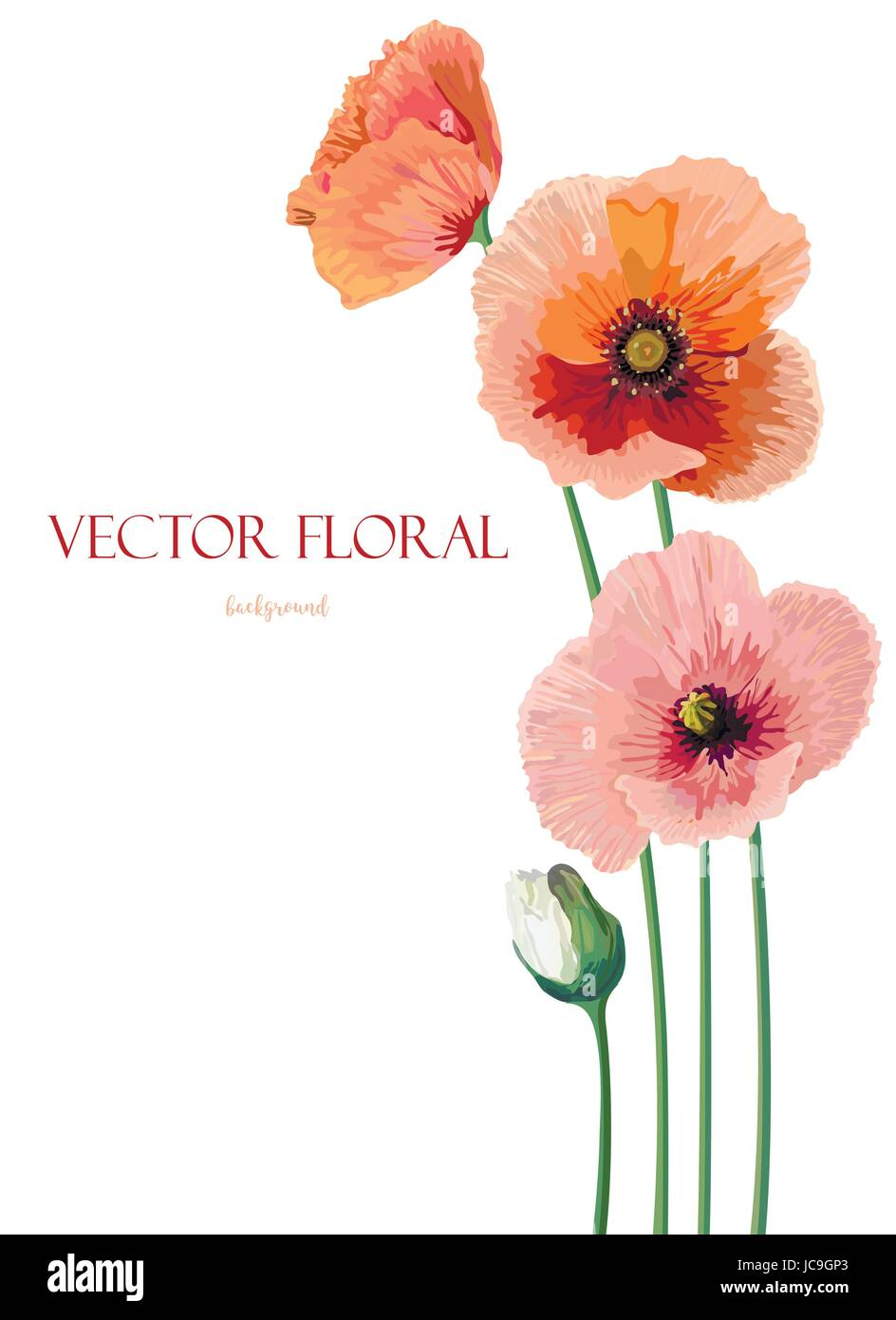 Flower Of Pink Peach Poppy Flowers Buttons Leaves Beautiful Lovely