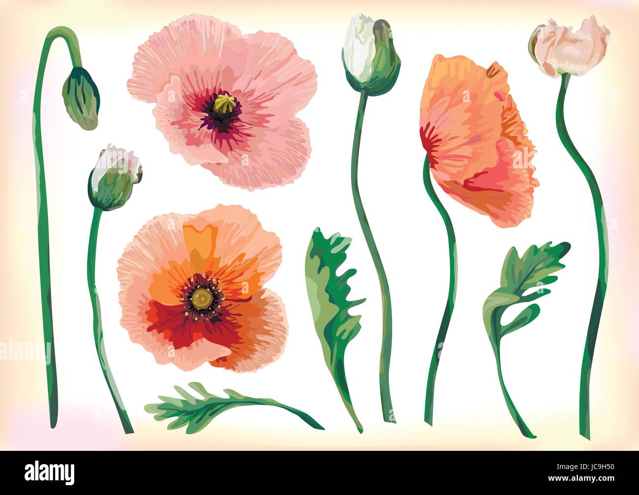 Poppy flower watercolor stock photos poppy flower watercolor stock vintage poppy beautiful soft flowers peach red pink buttons leaves botanical pastel blooming floral fine spring mightylinksfo