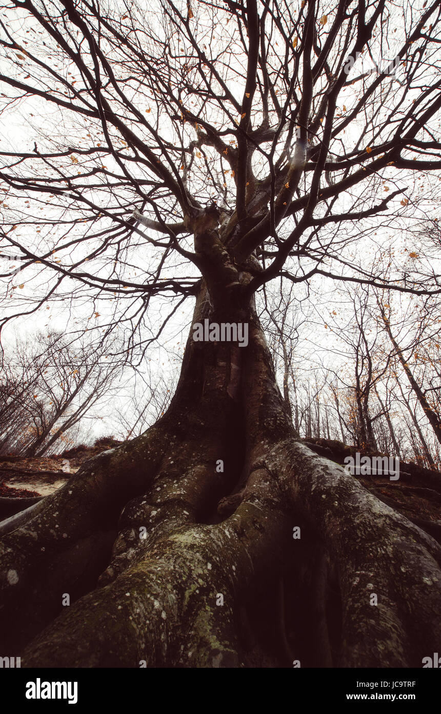 Ground Level View Of Old Tree With Twisted Branches And