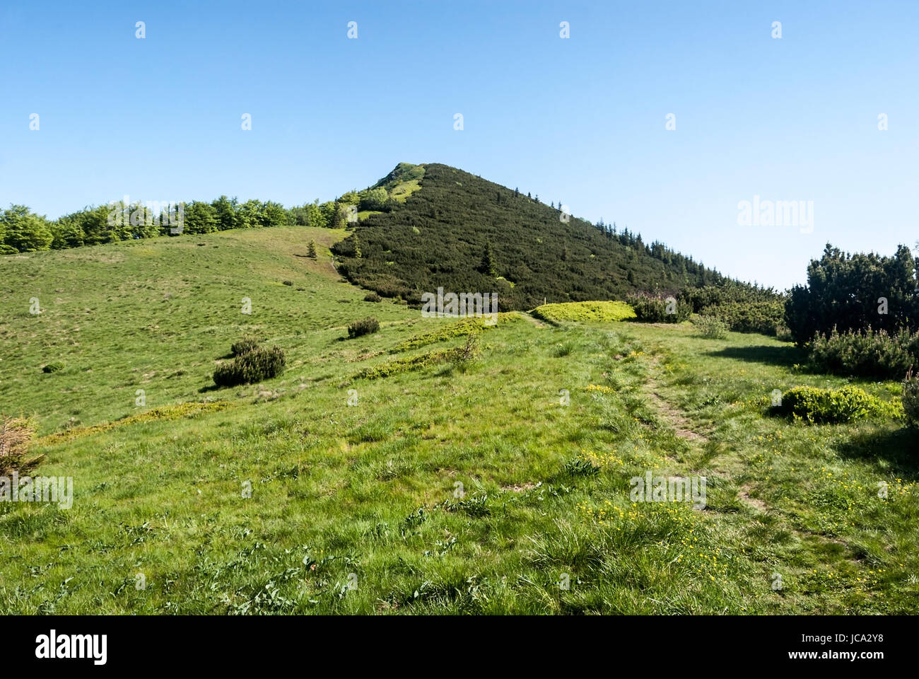 mountain meadow on Za Kraviarskym pass with Kraviarske hill covered by pinus mugo in spring Mala Fatra mountains Stock Photo