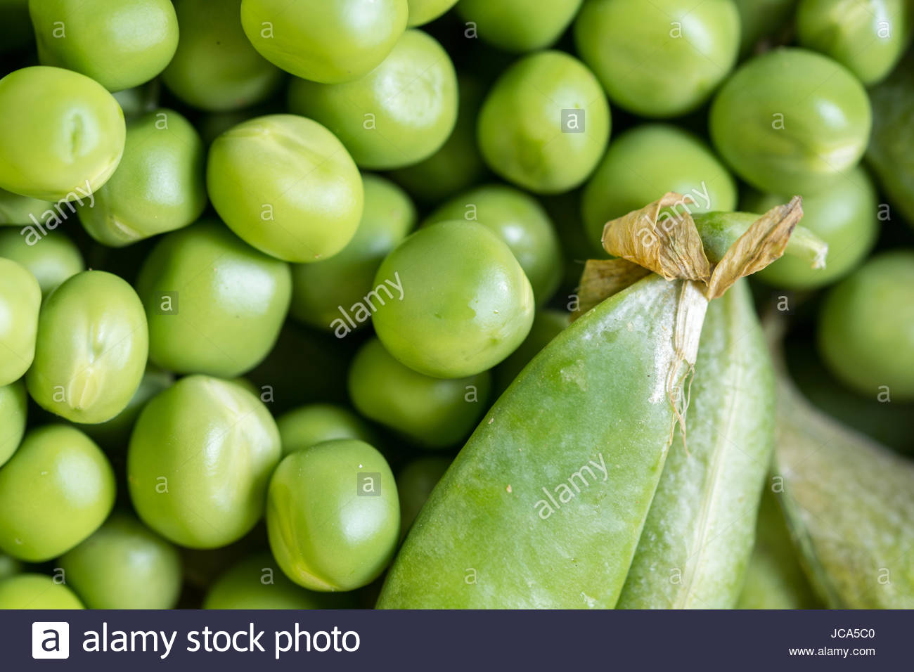 Closeup macro pile of fresh green peas ready for cleaning. - Stock Image