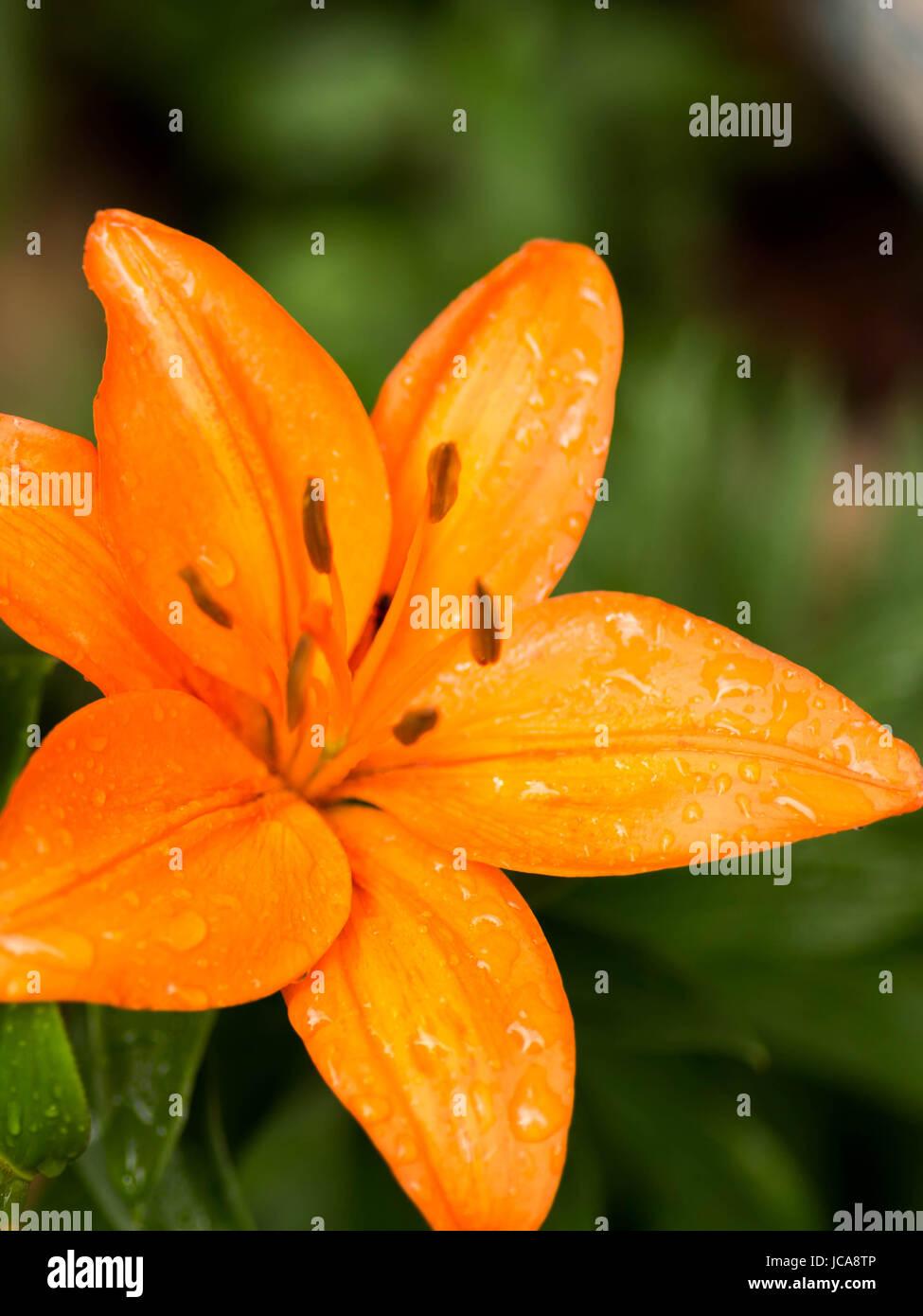 June blooms - Stock Image