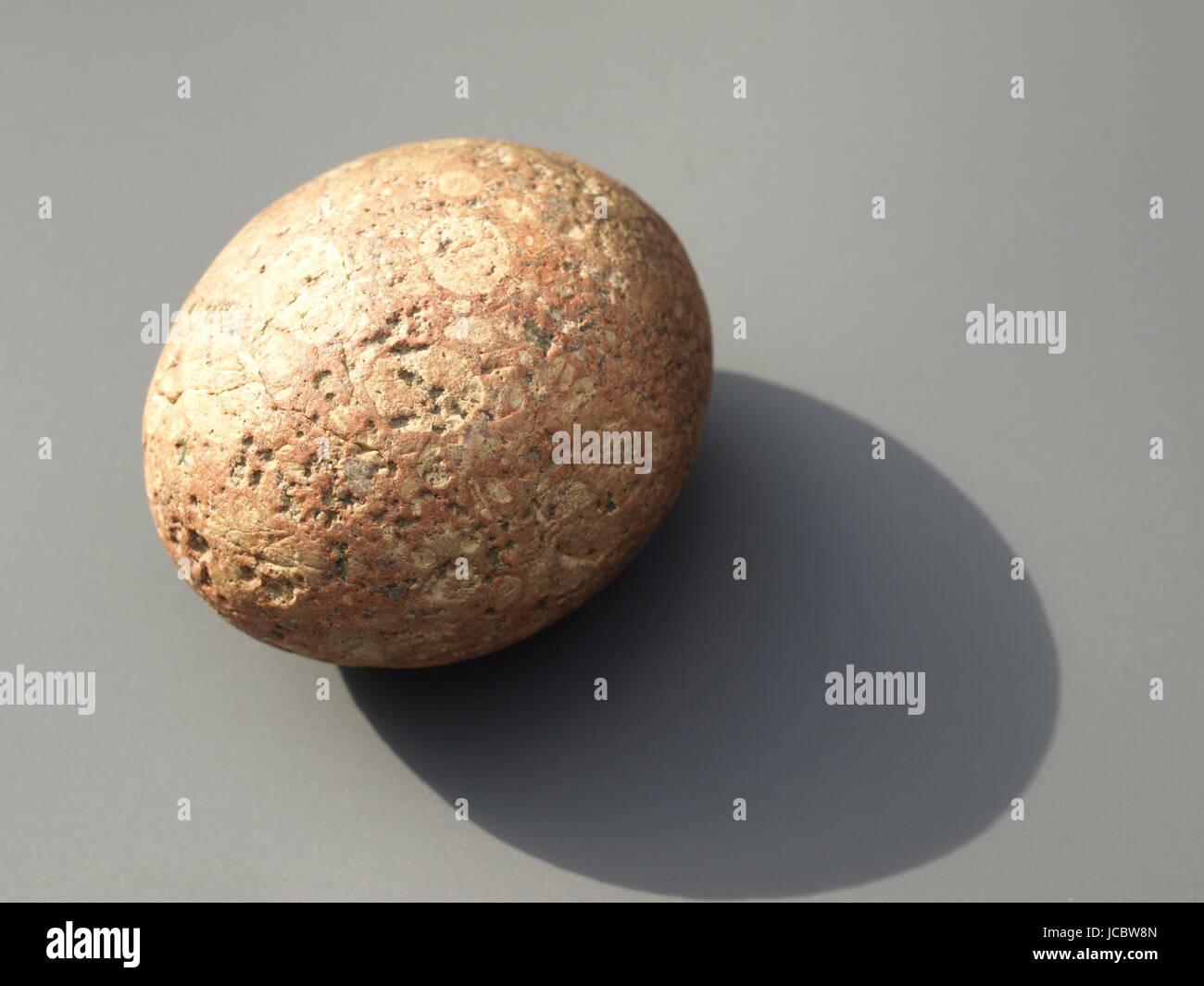 fossilized dinosaur egg - Stock Image
