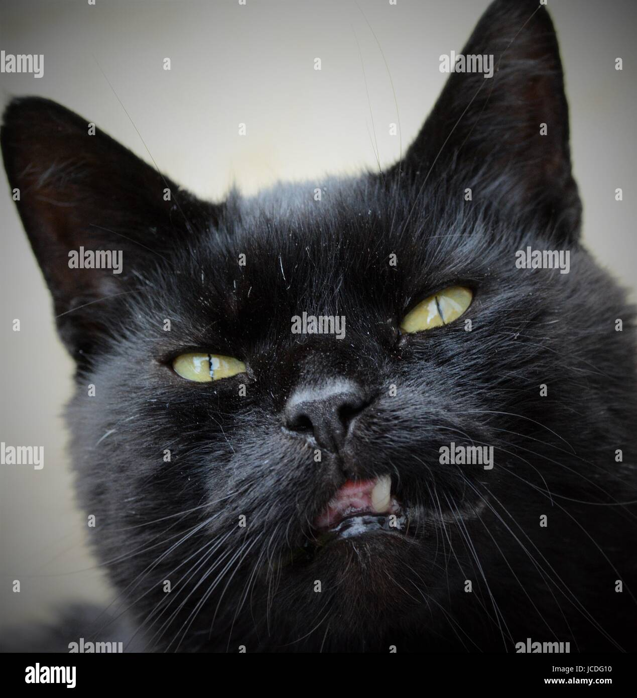 Close-up of black cat with green eyes - Stock Image