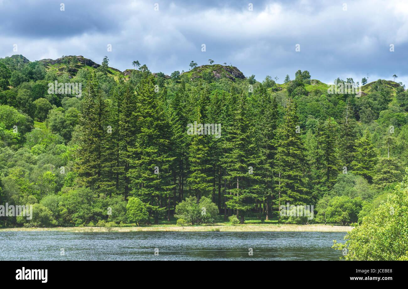 Yew Tree Tarn near Coniston Lake District - Stock Image
