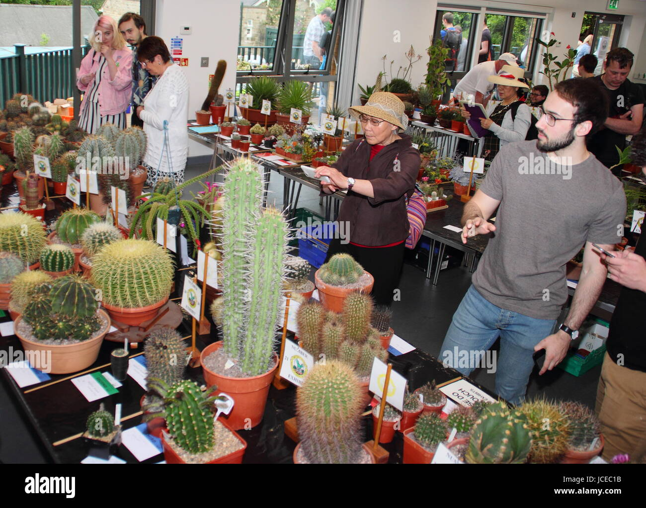 Visitors peruse displays at an annual cacti show organised by the Sheffield branch of the British Cactus and Succulent - Stock Image