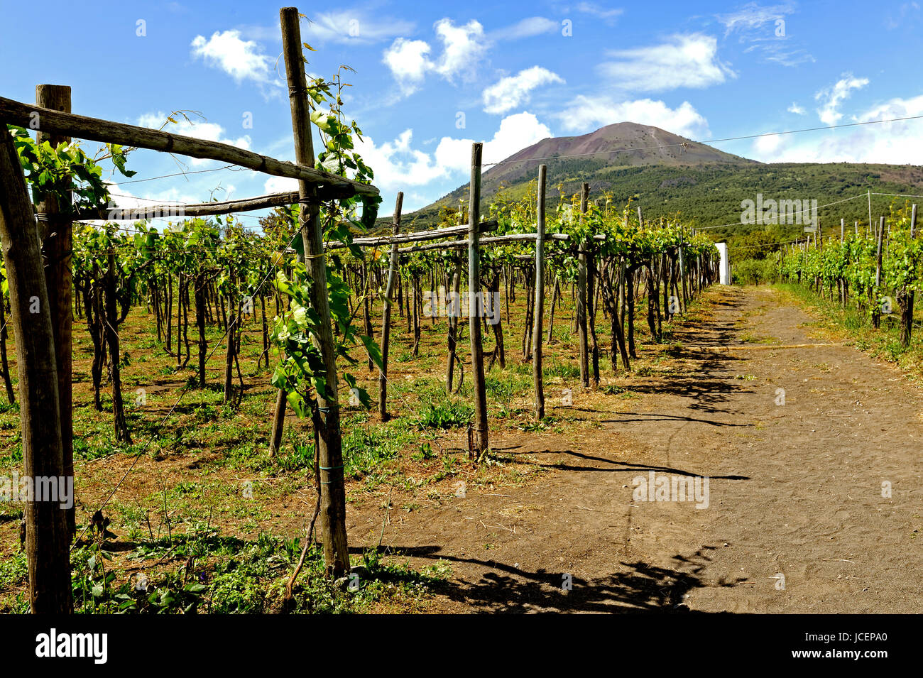 Wine production in Italy Cantina del Vesuvio Stock Photo