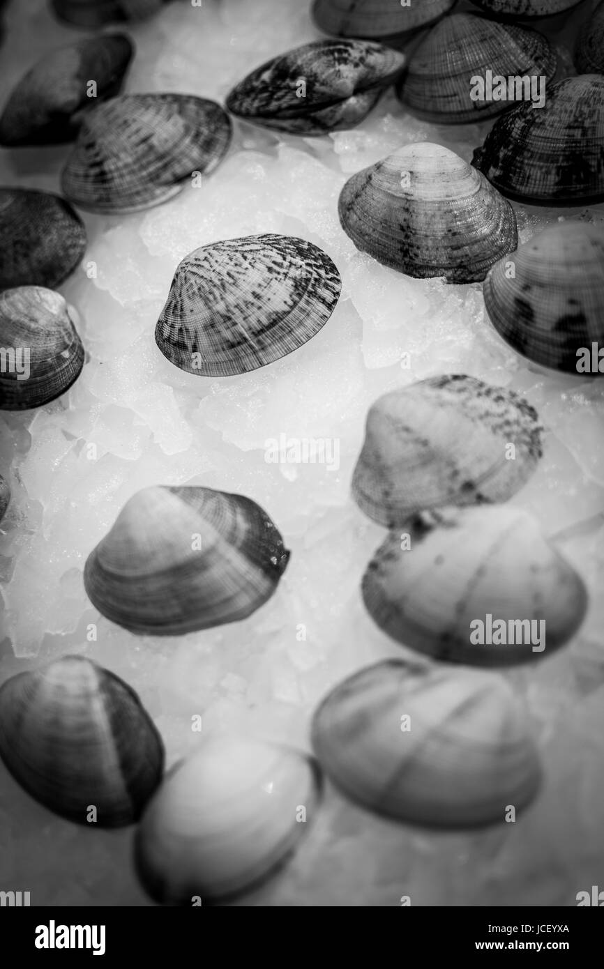 Pile of Fresh Seafood Clams on Ice Close Up Background. Healthy Eating. - Stock Image