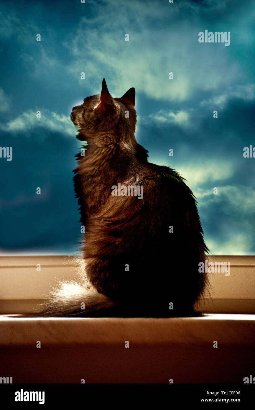 cat sitting by the window and looking at the sky - Stock Image