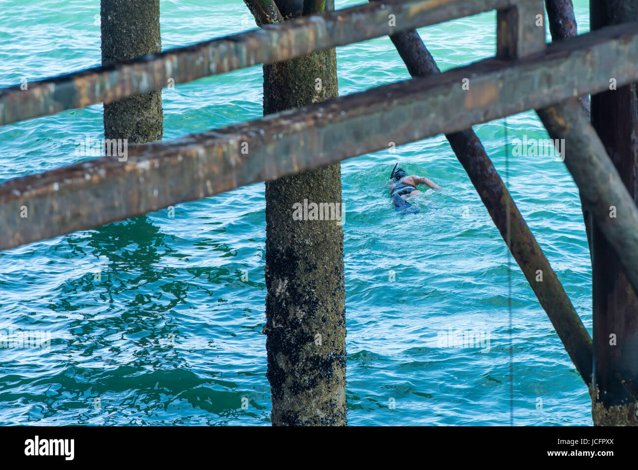 Solo woman swimmer swimming in the English Channel underneath the famous victorian Palace Pier in Brighton on a Stock Photo