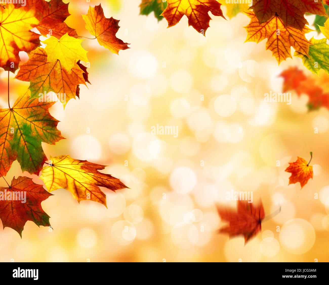 Herbst Hintergrund Mit Buntem Laubwerk Im Vordergrund Und Unscharfe