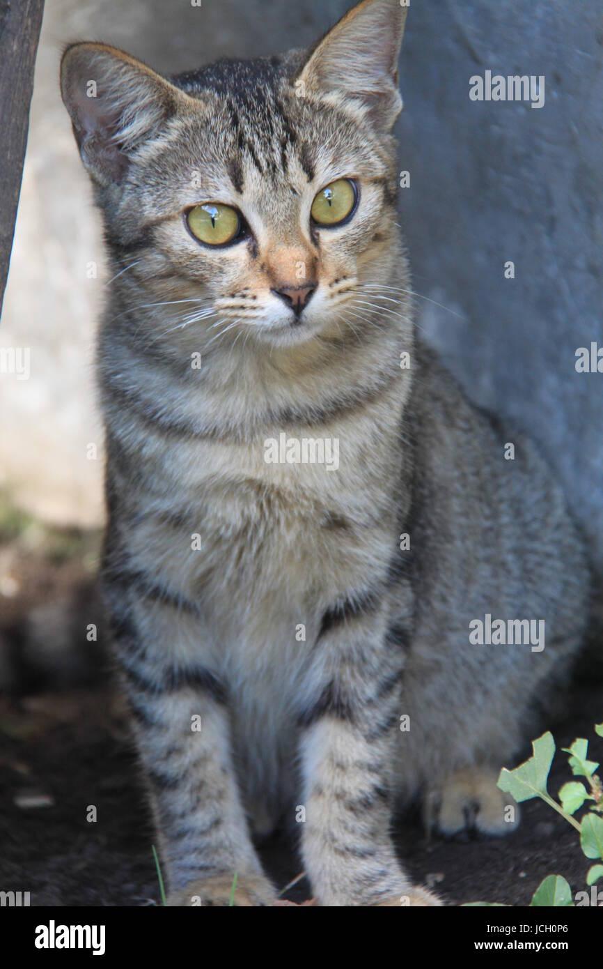 brown cat - Stock Image
