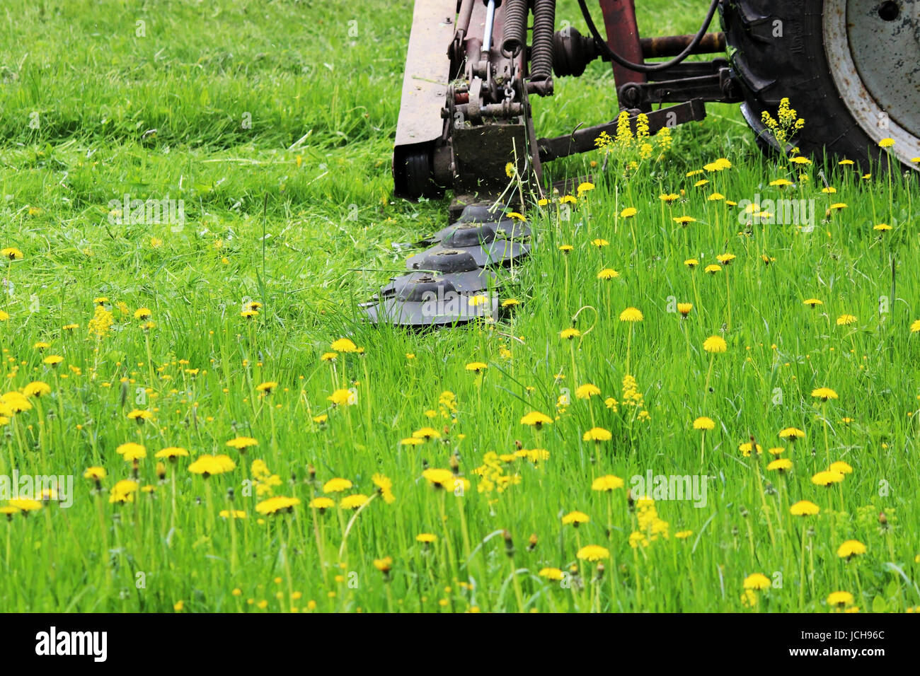 A tractor with a special attachment automatically mows grass and dandelions on an urban lawn - Stock Image
