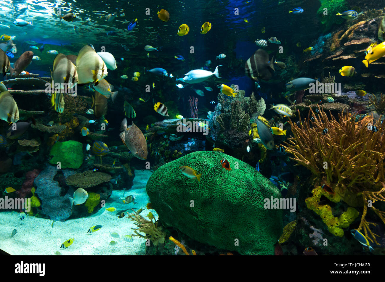 Exotic Marine Animals Swimming In An Aquarium In Toronto Canada Stock Photo Alamy