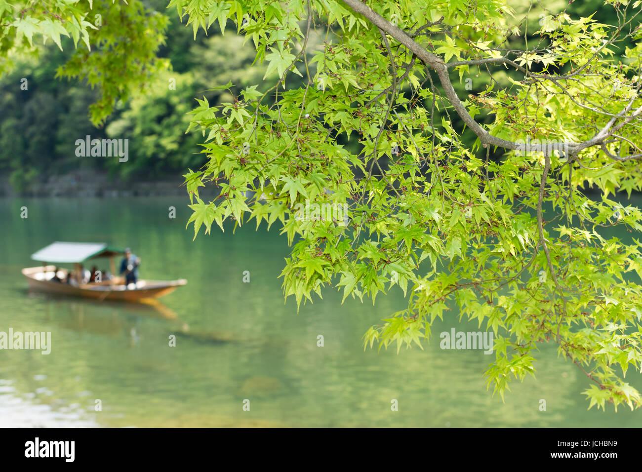 YOTO, JAPAN - APRIL 26th  : Closeup tender green maple leaves in the shore of Hozu(Katsuragawa) River  in Arashiyama - Stock Image