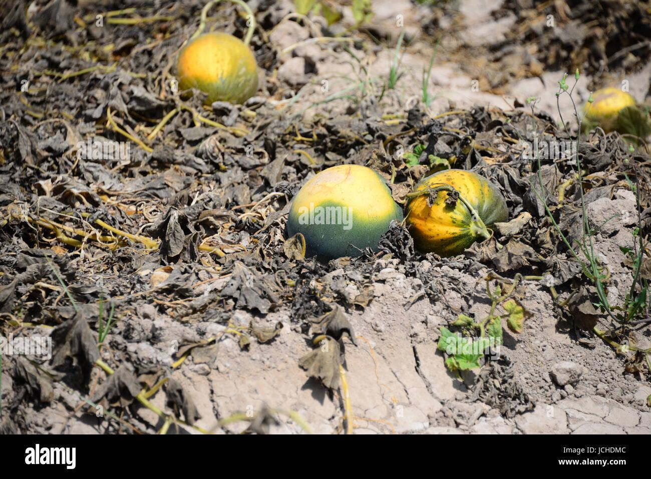 fruit yearlong Stock Photo