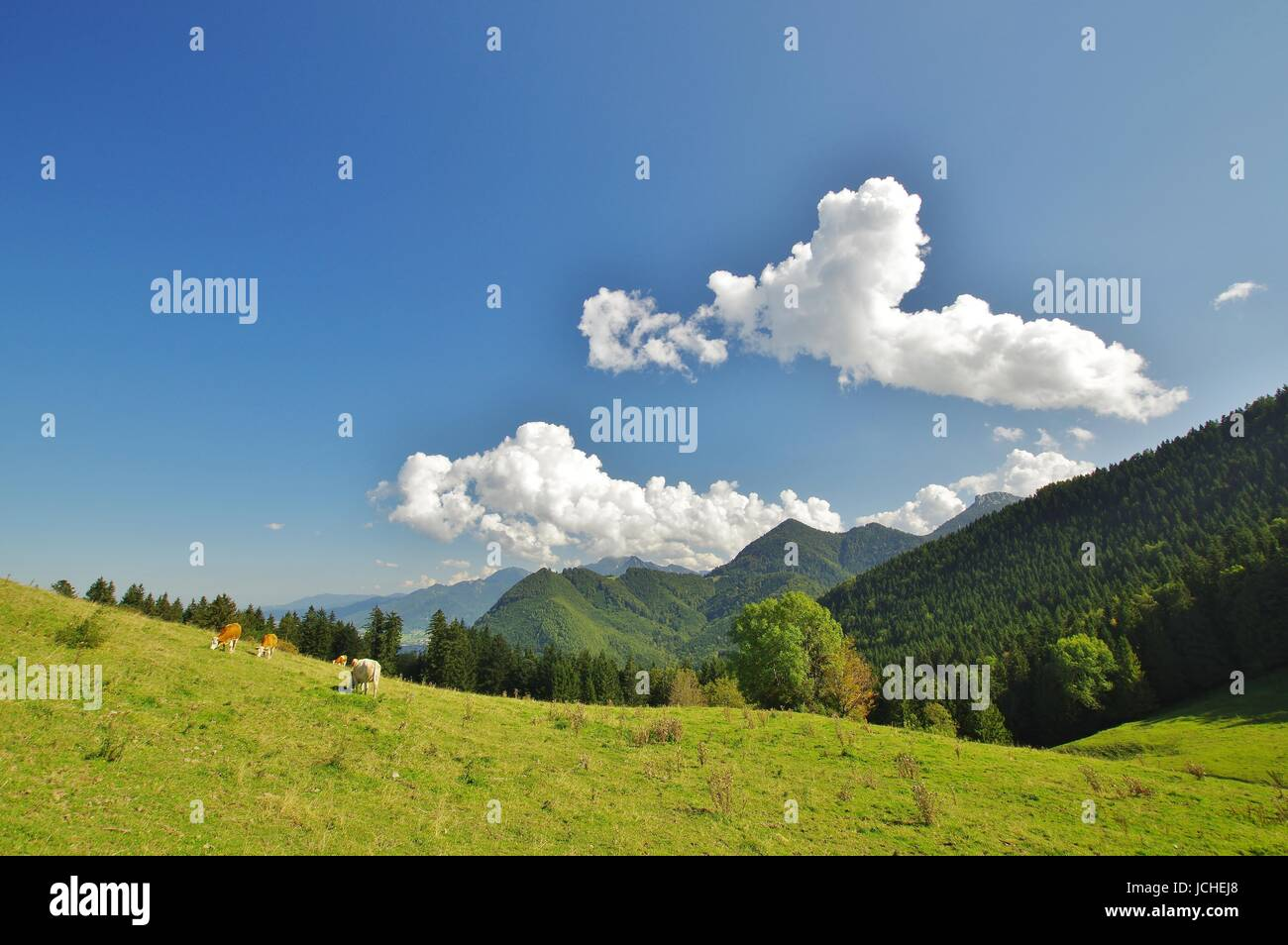 panorama to lindl-alm,bernau,chiemgau Stock Photo