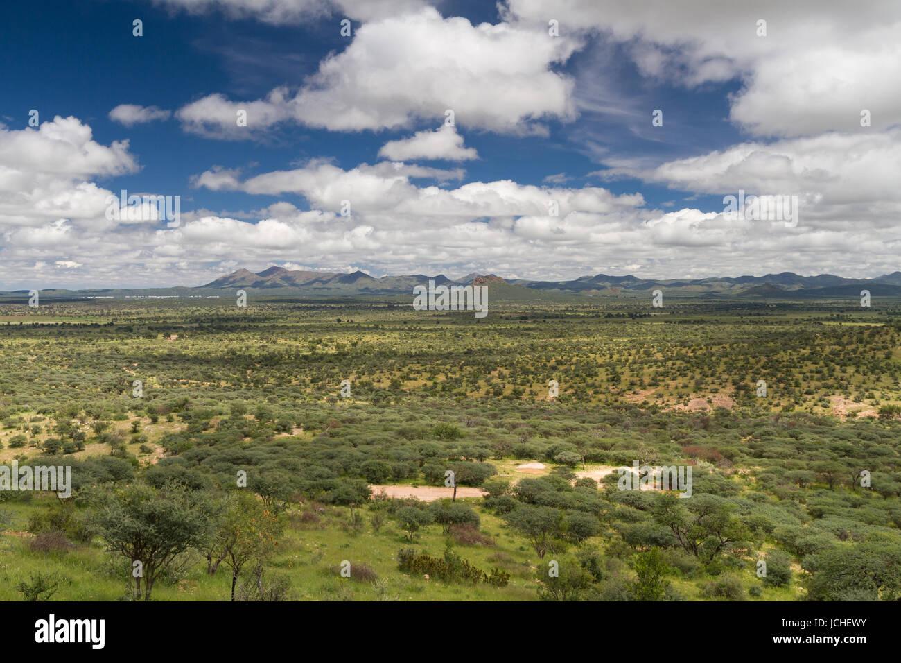 Namibian grassland in the rain season near Windhoek, Namibia, Africa - Stock Image