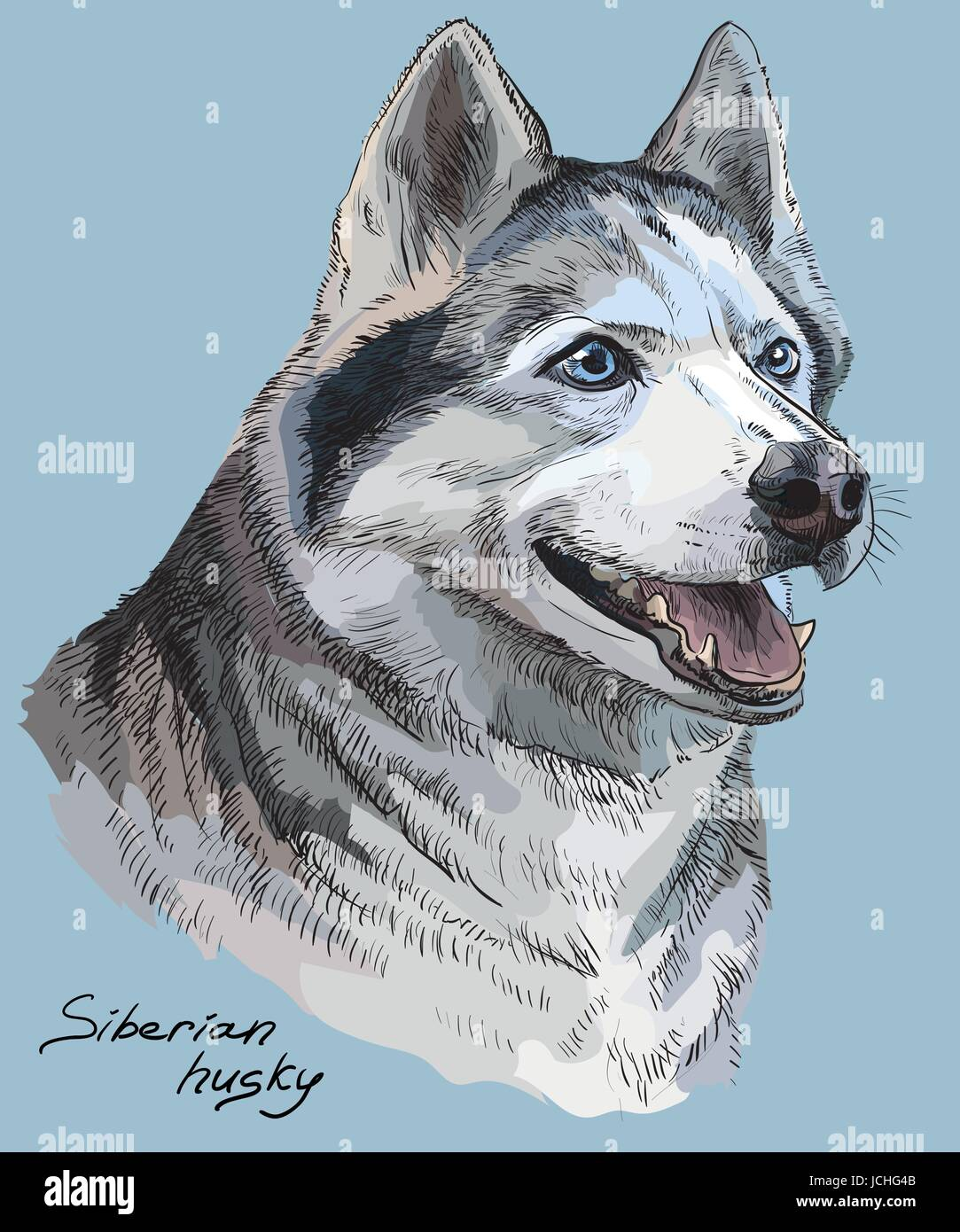 Vector colored portrait of siberian husky hand drawing Illustration on blue background - Stock Vector