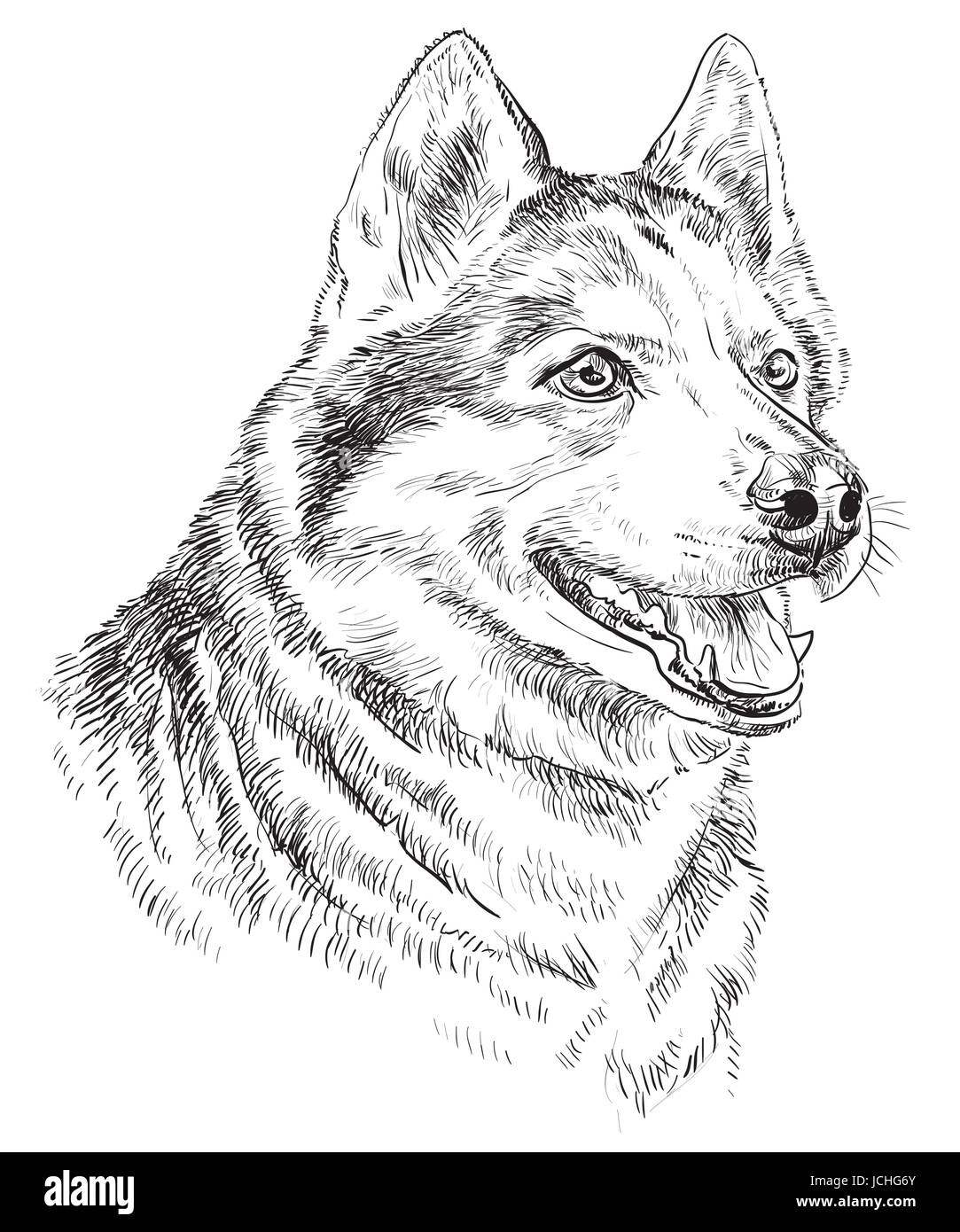 Vector Portrait of siberian husky in black color hand drawing Illustration on white background - Stock Vector