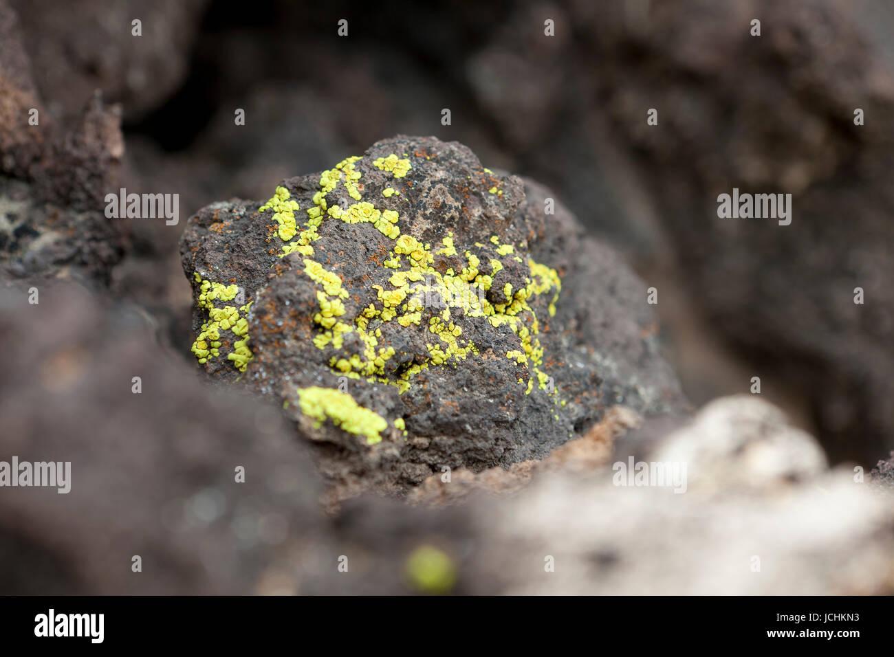 Lichens on rock (Epilithic crustose lichen) - Arizona, USA - Stock Image
