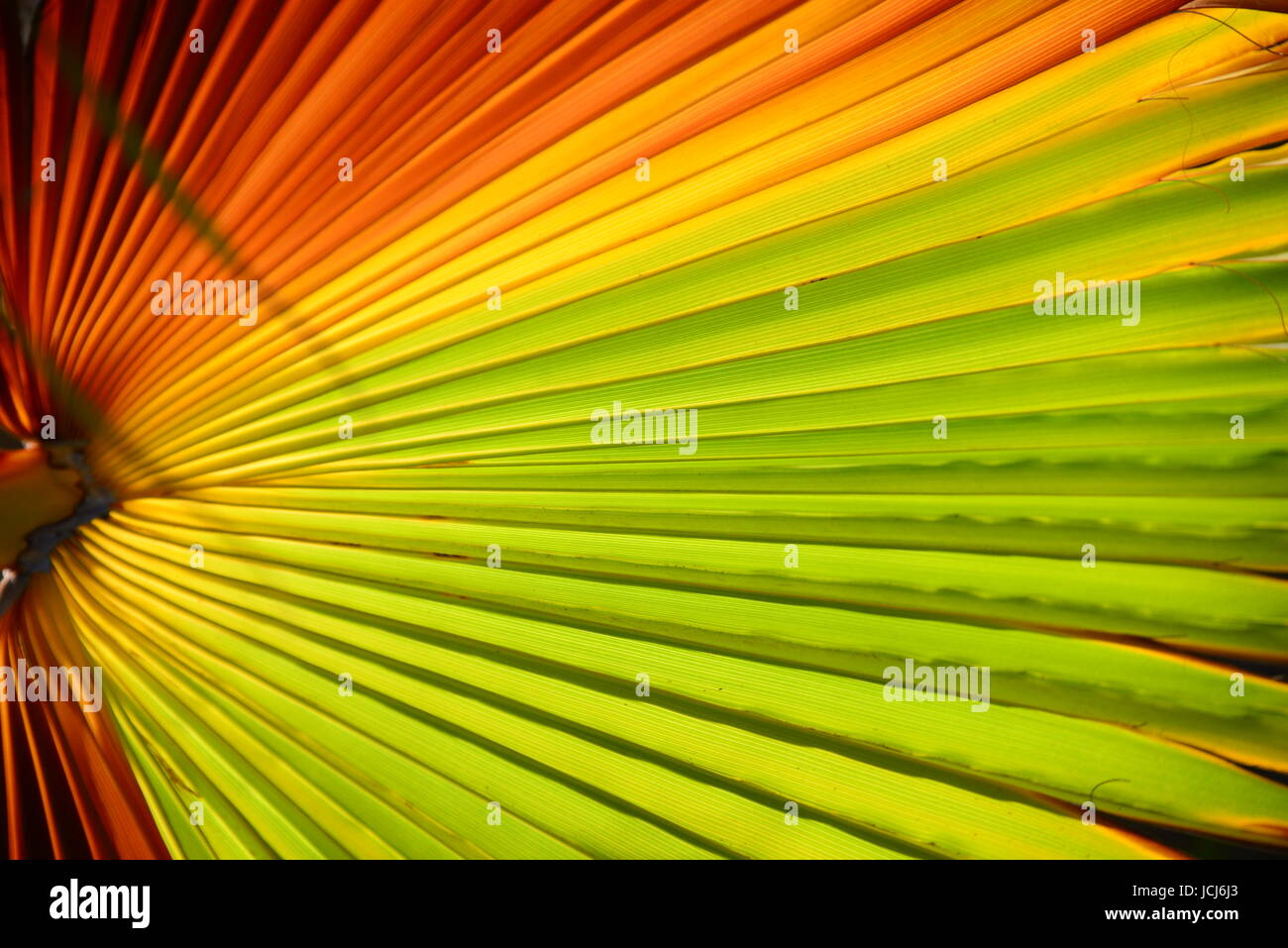 Palmenblatter Palmenblatt Stock Photo 145459163 Alamy