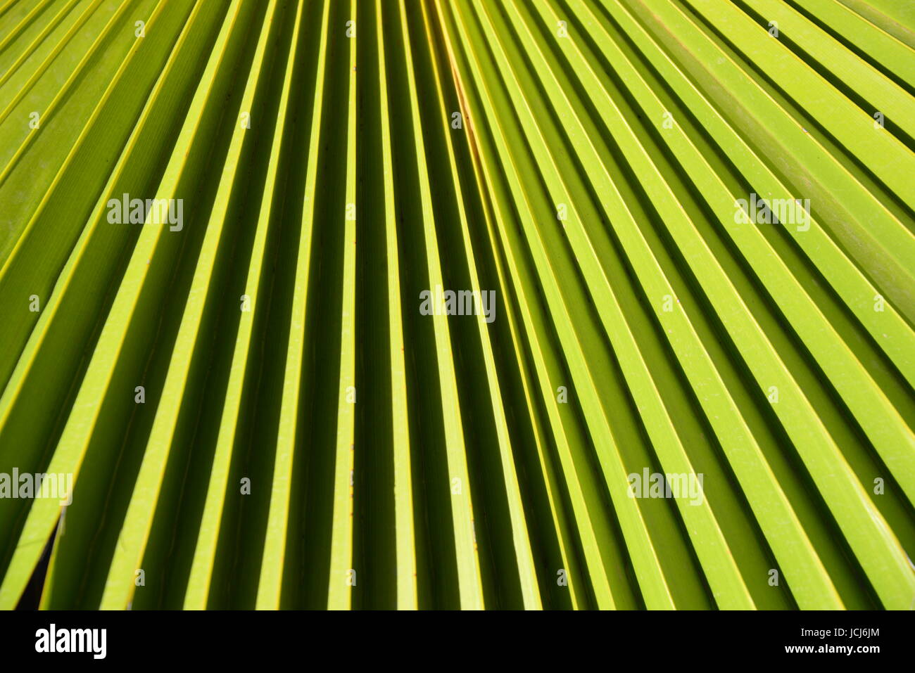 Palmenblatter Palmenblatt Stock Photo 145459180 Alamy