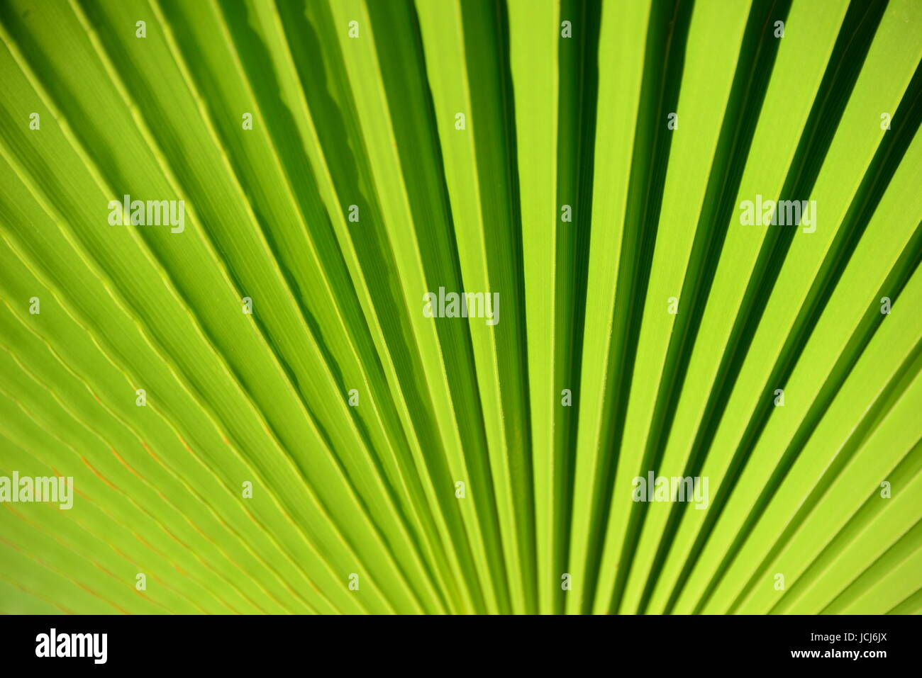 Palmenblatter Palmenblatt Stock Photo 145459186 Alamy