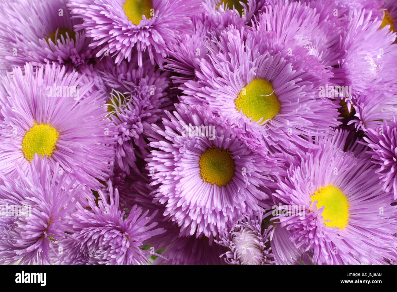 Light Purple Flowers Stock Photos Light Purple Flowers Stock