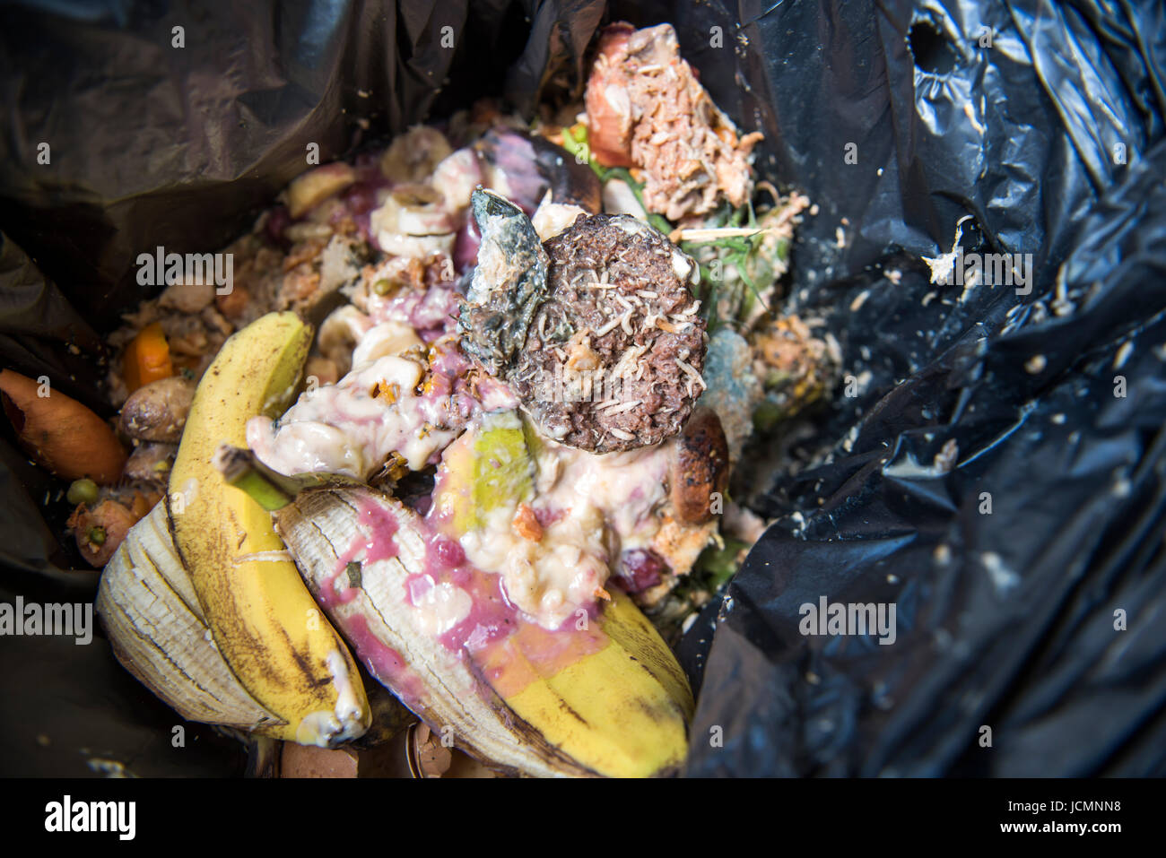 A Domestic Food Waste Container Which Has Become Infested With Stock