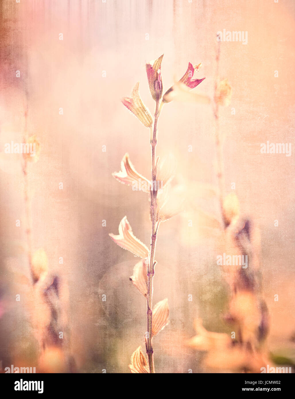 Textured Floral Background - Stock Image