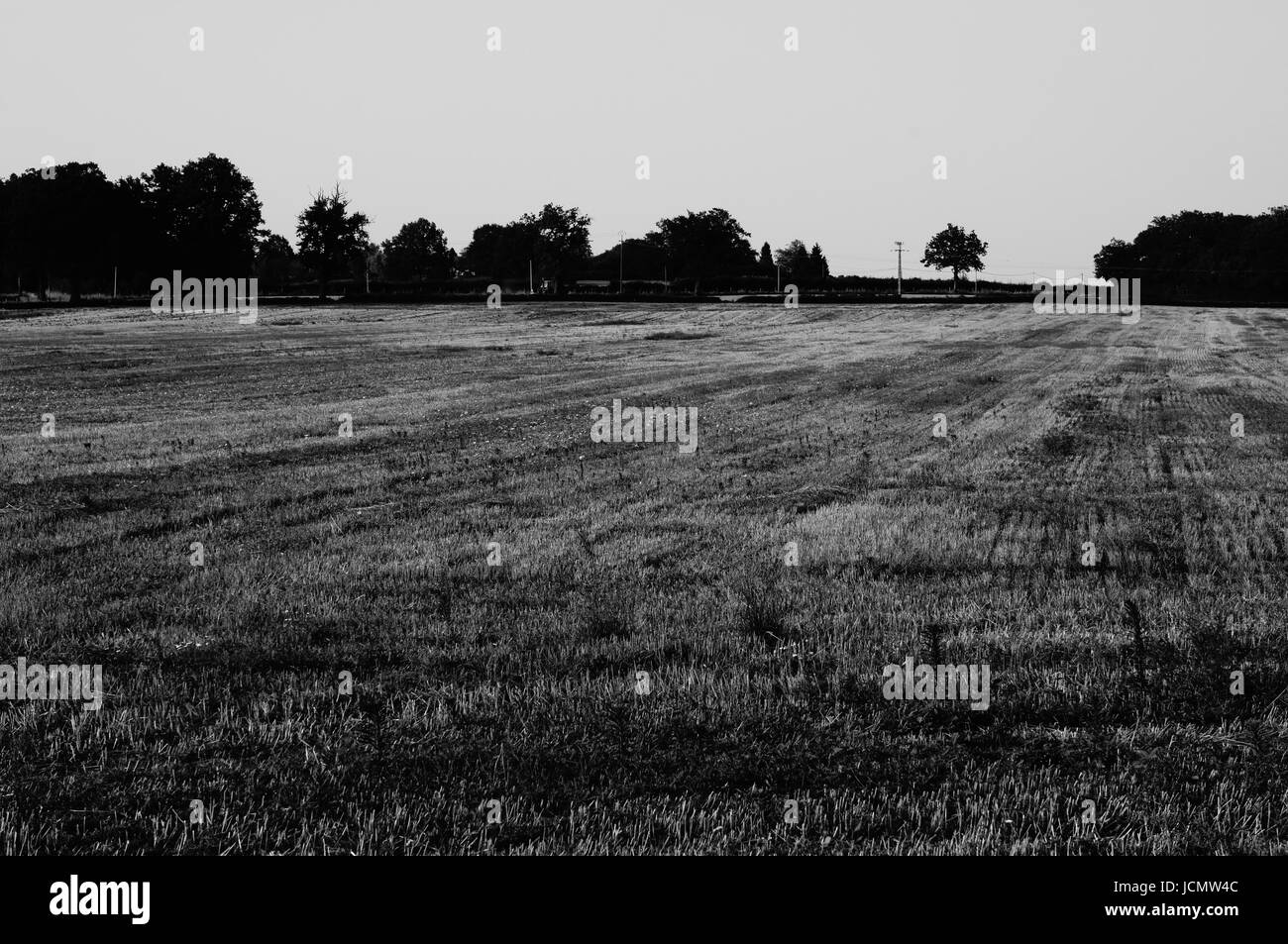 Black and white photo of a wheat field in Southern France - Stock Image