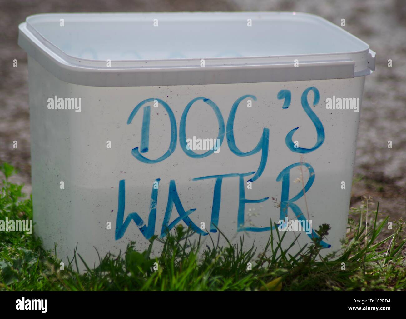 Dog's Water Tub. Exeter Quay, Devon, UK. June, 2017. Stock Photo