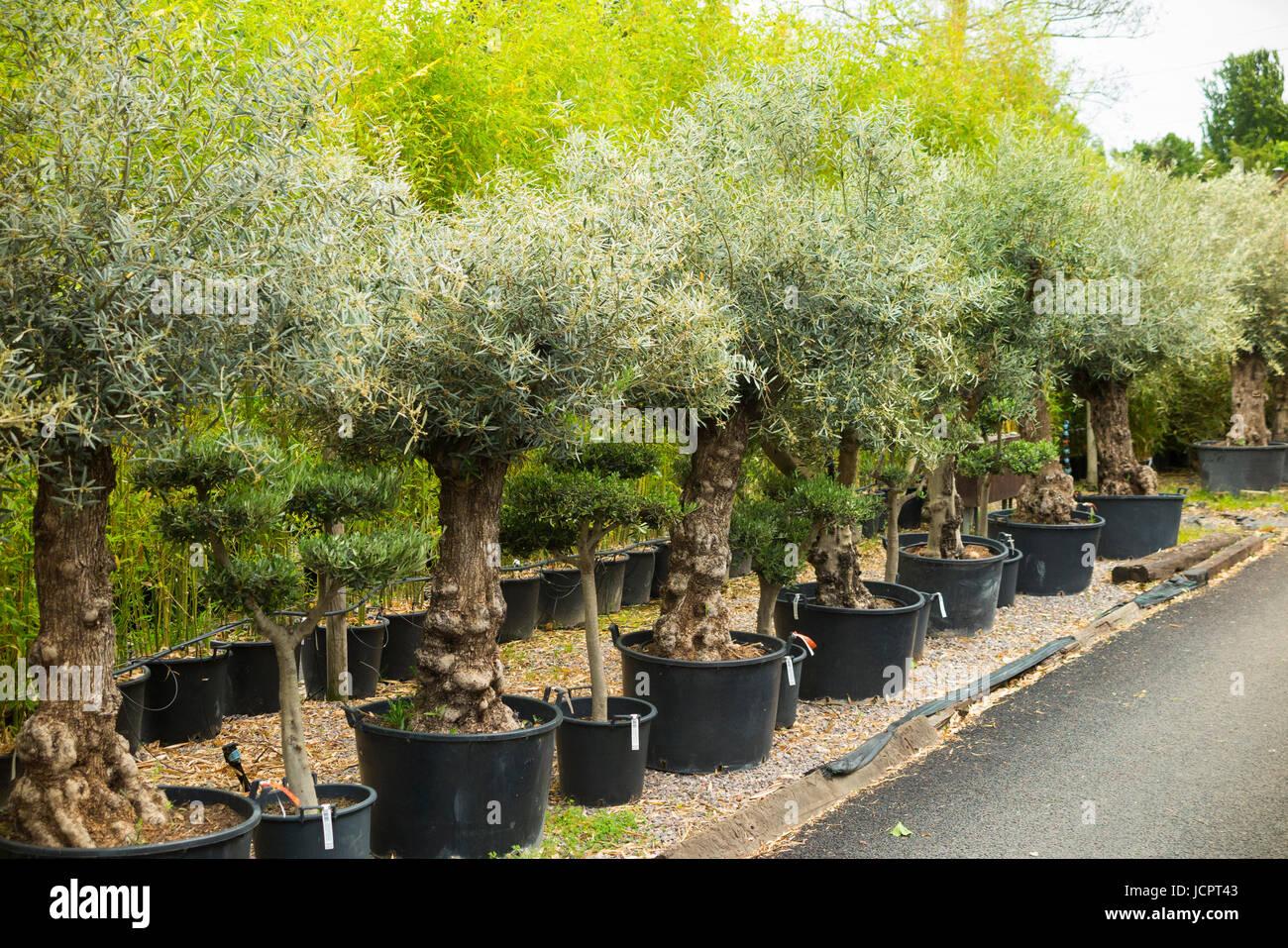 Olive Grove Garden Centre Garden Ftempo