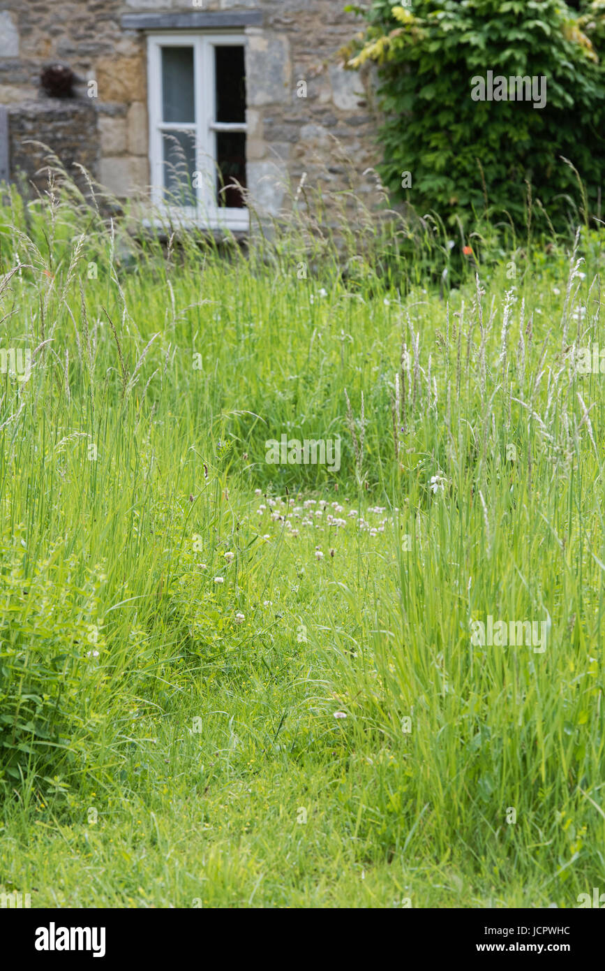 Mown path through cottage garden. Filkins, Cotswolds, Oxfordshire, UK - Stock Image