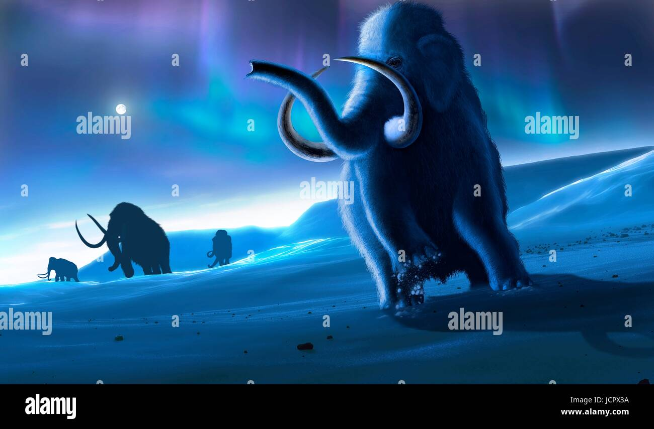 Artwork of the woolly mammoth (Mammuthus primigenius), or tundra mammoth. This animal lived during the Pleistocene - Stock Image
