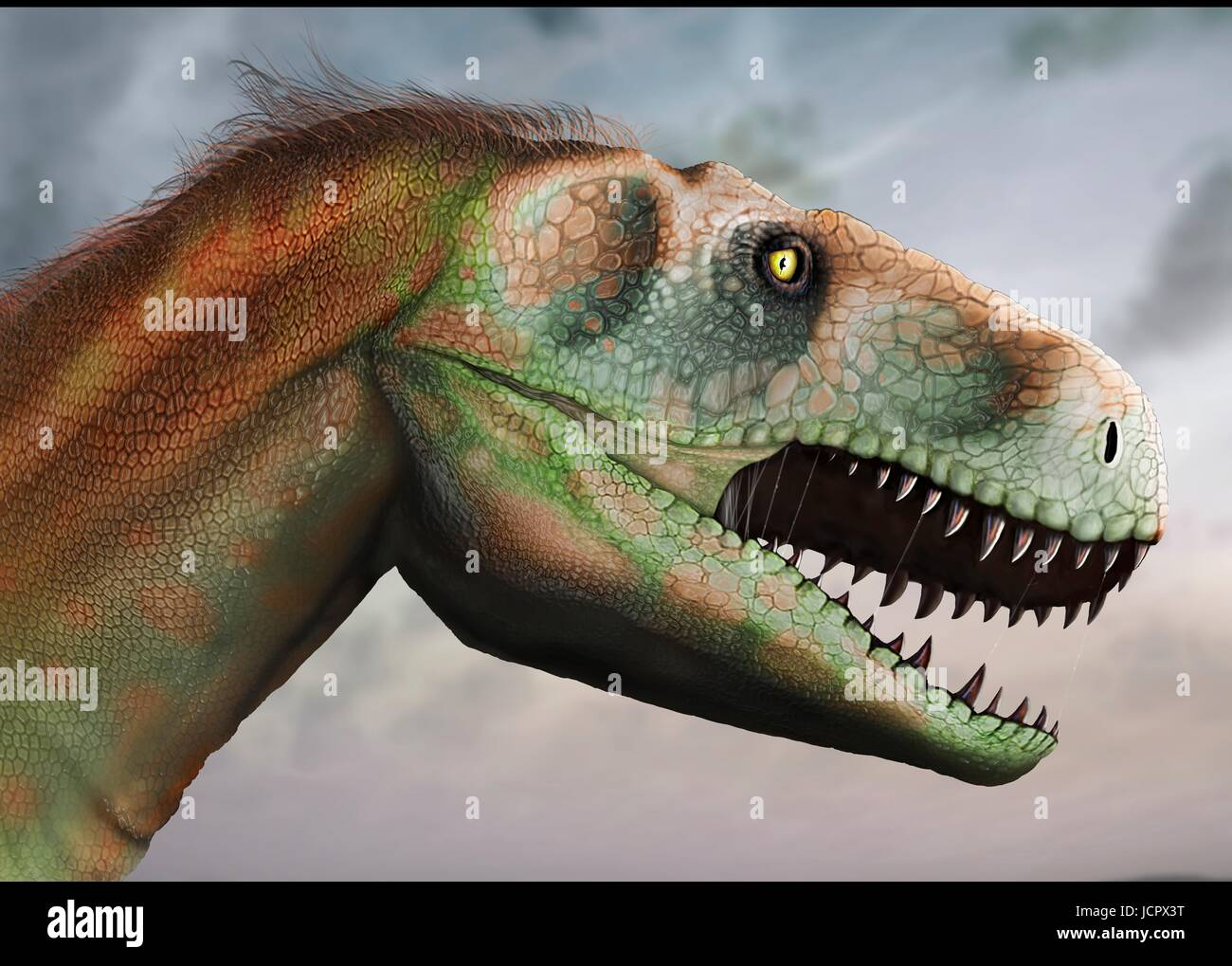 Head study megalosaurus.Megalosaurus is genus extinct meat-eating dinosaurs,theropods,from Middle Jurassic period - Stock Image