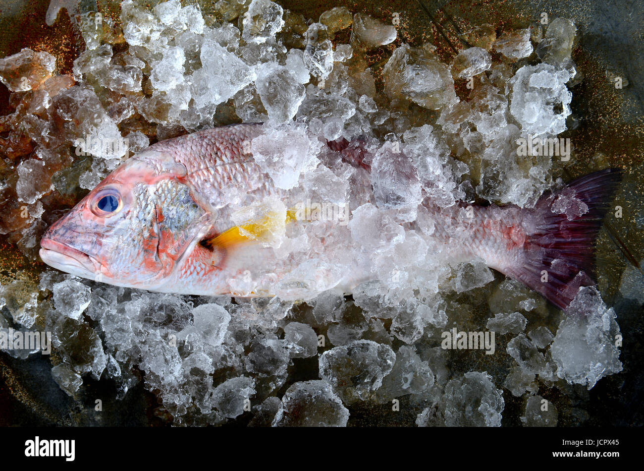 Fresh red snapper fish from fishery market frozen in ice piece. Stock Photo